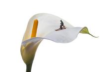 Flor De Pato Con Esquiador En ...