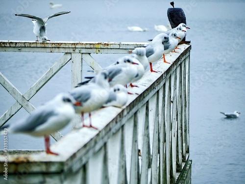 Photo Seagull Perching On Railing In Sea