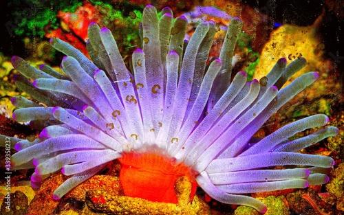Foto Close-up Of Sea Anemone In Fish Tank At Aquarium