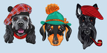 Set Of Hipster Dogs. American ...