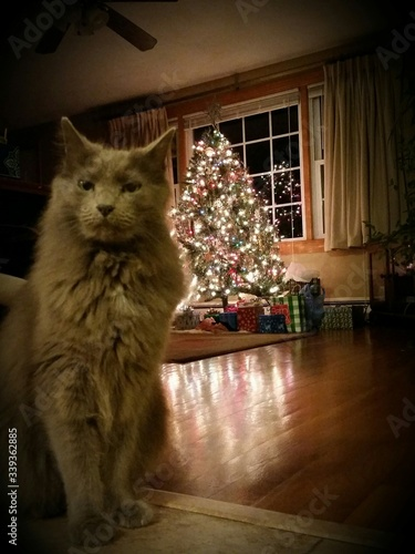 Canvas-taulu Portrait Of Cat Sitting At Home During Christmas