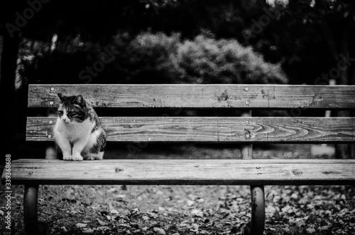 Cat Sitting On Bench In Park Fotobehang