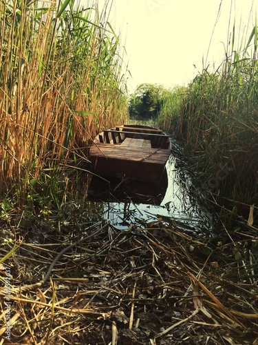 Boat Amidst Plants On Canal