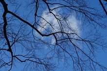 Low Angle View Of Bare Tree Branches Against Blue Sky