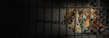Banner Of Tiger In The Cage