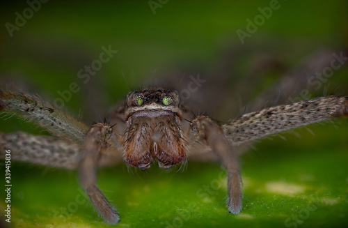 Macro photos of  spiders ,hammerhead,wasp,moth,butterflies,grass hopper,mosquito Canvas Print