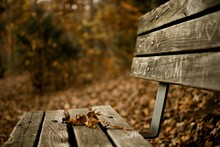 Close-up Of Dry Leaf On Bench