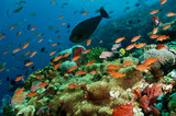 Reef scenic Komodo National Park, Indonesia.