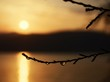 Dew Drops On Twig By Lake Against Sky During Sunrise