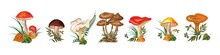 Set Of Wild Mushrooms. Seven Types Of Mushrooms On A White Background. Vector Watercolor, Horizontal Format. Stock Vector Illustration. EPS 10.