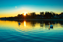 Swans Swimming In Lake Against Sky During Sunset