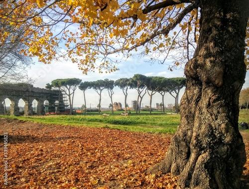 Fototapeta Trees On Field Against Abandoned Aqueduct