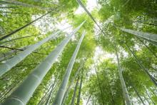 下から見上げた竹林