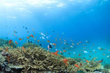 Fototapeta na wymiar サンゴの海 石垣島2