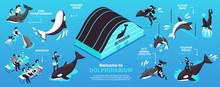 Dolphinarium Isometric Infographics Layout