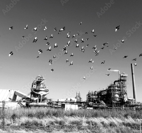 Leinwand Poster Low Angle View Of Birds Flying Over Factory