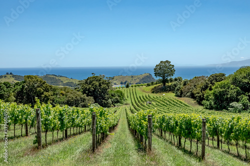 Waiheke Island vineyard, Auckland region, New Zealand © sardinelly