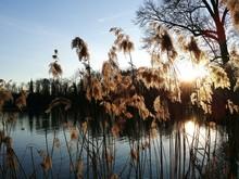 Close-up Of Reeds Growing At Lakeshore