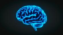 Brain Hologram / X-Ray