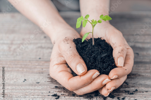 Photo Arbor day concept, woman holds the sprout of a plant in her hands on a wooden table