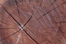Tree Cut Wood Pattern Ring Ins...