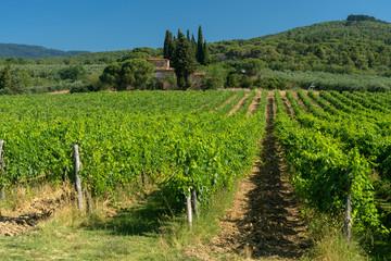 Fototapeta na wymiar Summer landscape in Arezzo province, italy