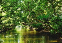 Scenic View Of River Amidst Trees
