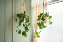 Green Vine Plant In A Hanging Small Plant Pot