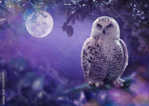 Valokuva The white owl