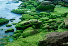 High Angle View Of Green Moss Covered Rocks In River