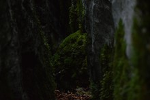 Close-up Of Moss Covered Rocks In Forest
