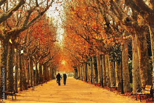 Obraz Rear View Of Couple Walking On Road Amidst Trees On Field - fototapety do salonu