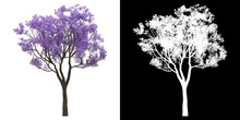 Left View Of Tree (Jacaranda Mimosifolia) Png With Alpha Channel To Cutout 3D Rendering