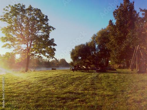 Fototapety, obrazy: Trees On Grassy Field