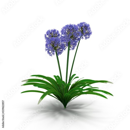 Photorealistic highly detailed visualization of the Agapanthus africanus  plant Canvas Print