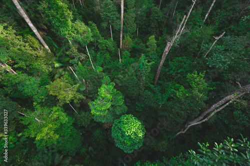 Earth Day eco concept with tropical forest background, natural forestation preservation scene with canopy tree in the wild, concept on sustainability and environmental renerable - fototapety na wymiar