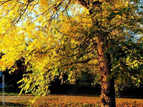 Fototapety, obrazy: Autumn Tree On Field In Park