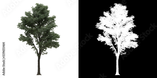 Fotografía Left view of tree (Tilia) png with alpha channel to cutout 3D rendering