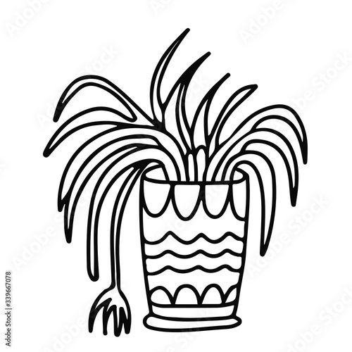 Fototapeta Spider plant in a pot decorated with ornaments. Houseplant in doodle style. Hand drawn vector illustration in black ink isolated on white background. obraz na płótnie