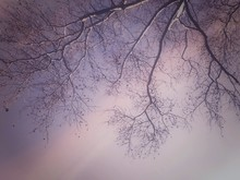 Low Angle View Of Bare Branches Against Sky