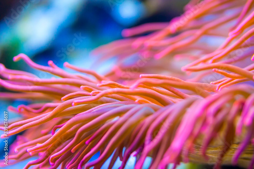 Close-up Of Purple Flower Blooming Outdoors Fototapet
