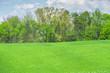 Leinwandbild Motiv Springtime Green Grass and Trees With Copy Space