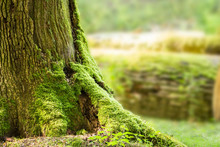 Moss Growing On Tree