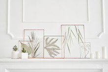 Picture Of Real Plants Between The Glasses. Natural Decorative Elements For Home Decoration: Herbarium In A Framework On A White Table