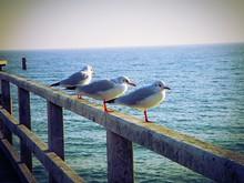 Seagulls Perching On Pier Railing By Sea
