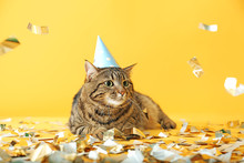 Cute Cat In Party Hat And Confetti On Color Background