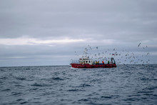 Fishermen Surrounded By Seagul...