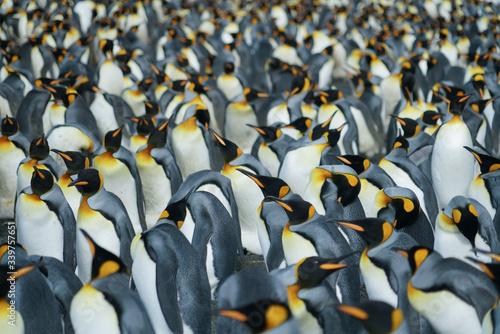 Obraz na płótnie Pattern of Penguins