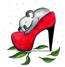 Coala Bear Slepping In Red Sho...