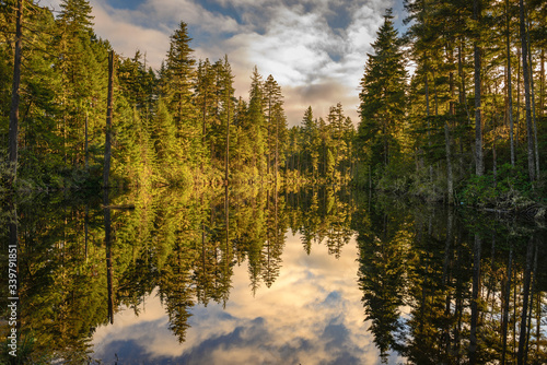 Headwaters, Anderson Creek Canvas Print